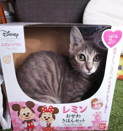おもちゃの箱に入る猫