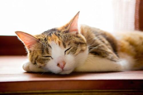 窓辺で気持ち良さそうに寝る猫
