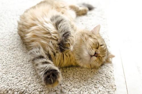 カーペットの上で眠っている家猫