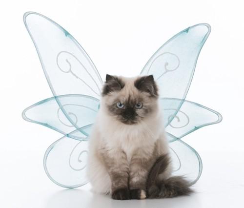 天使のコスプレをする猫