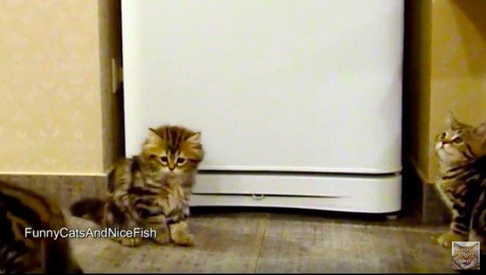消えたことに困惑する猫
