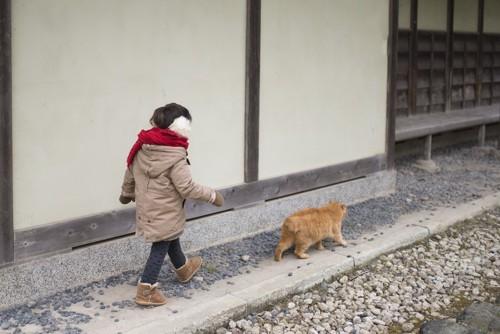 女の子の前を歩く茶トラ猫