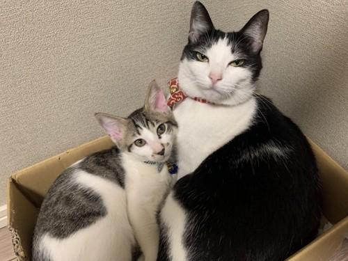 箱に入って寄り添う子猫と成猫