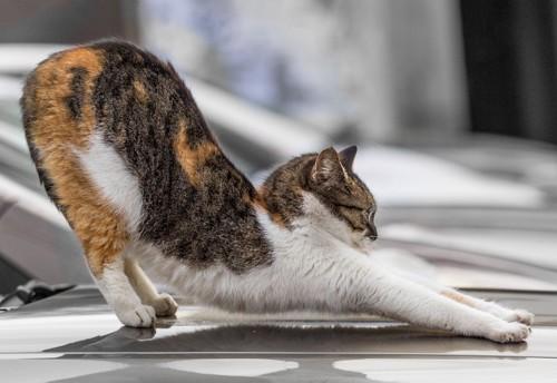 地面で伸びをする黒白猫