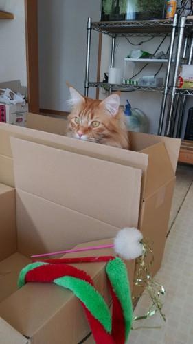 縦に置かれた段ボールから首を出す猫