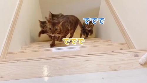 階段を上がる猫たち