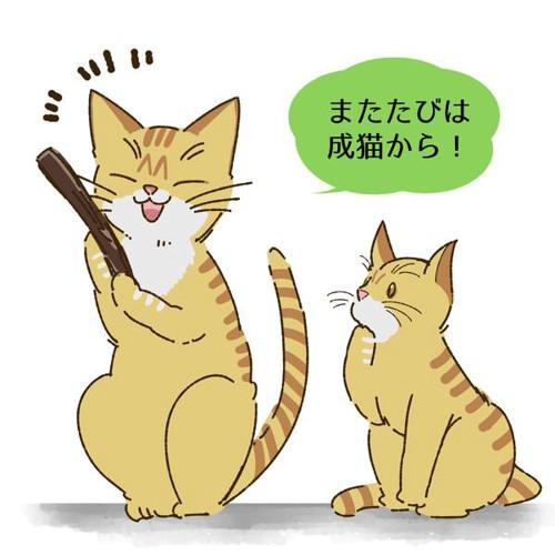 猫にマタタビを与える適齢期