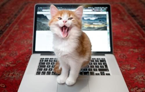 キーボードの上に乗る口を開けている猫