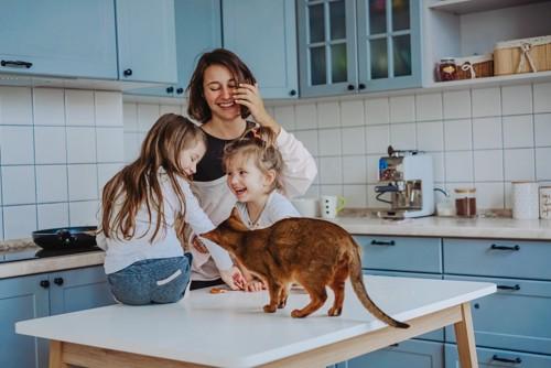 家族と共に台所にいる猫