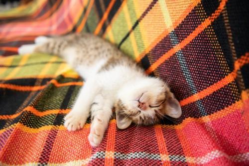 バンザイ気味の子猫