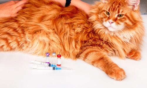 猫とワクチン