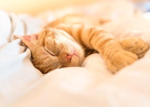 ベッドで気持ちよさそうに眠る猫