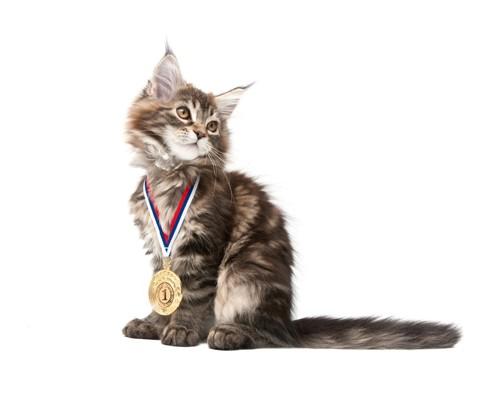 メダルをする猫