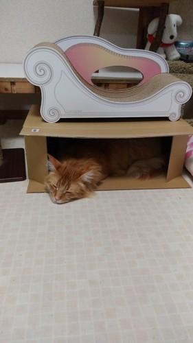 横に置かれた段ボール箱で寝る猫