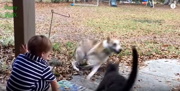 とび出す猫と逃げる犬