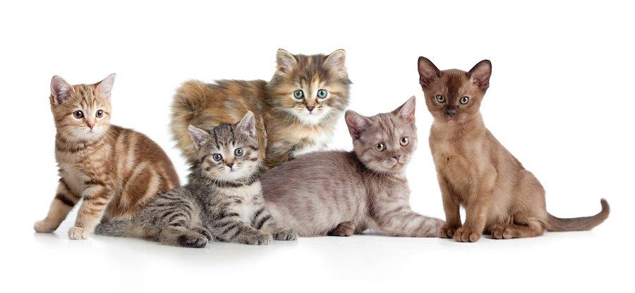 寄り添う種類の違う5匹の子猫