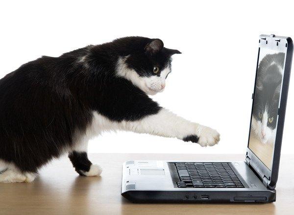 パソコンのキーボードに手をのばしている猫