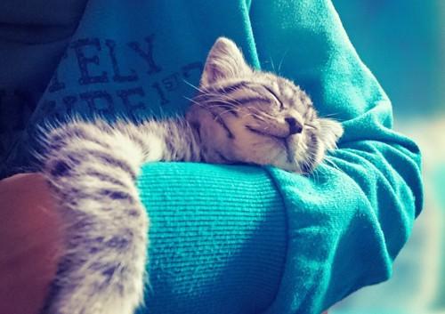 飼い主に抱かれて眠る子猫