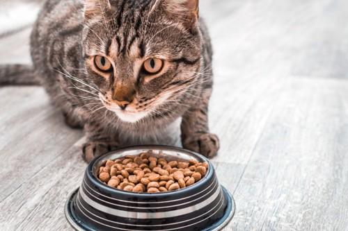 餌を前にした猫