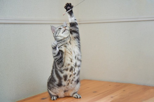 棒にタッチする猫
