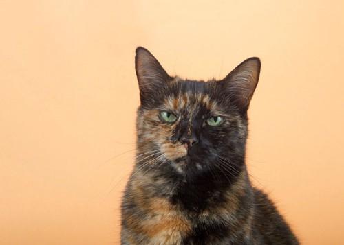 イラついた顔の猫