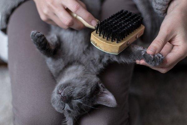 木製ブラシで毛を梳かれる灰色猫