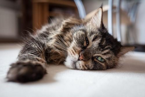 悪い顔の猫