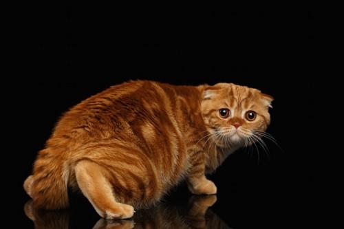 怯えて低い姿勢で逃げる猫