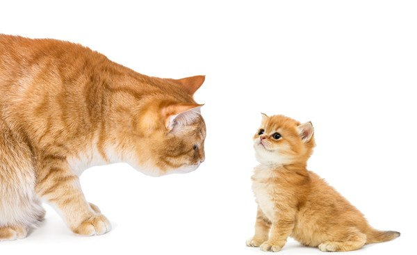 茶色いキジ猫の親子