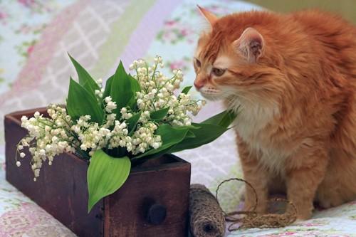 観葉植物の匂いを嗅ぐ猫