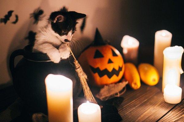 壺から体を乗り出す猫と小さなほうき、ろうそく、ジャックオーランタン