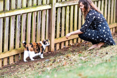 野良猫と女性