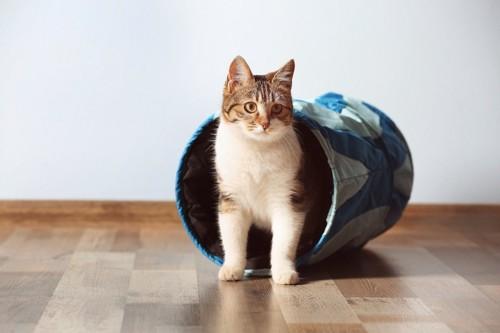 トンネルから出てきた猫