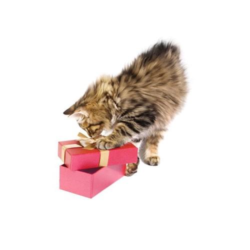 箱で遊ぶ子猫