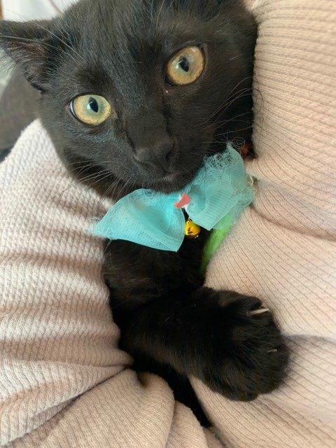 抱き着く黒猫