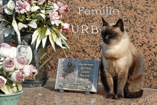 お墓に座る猫
