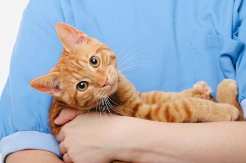 飼い主に抱かれてこちらを見つめる猫