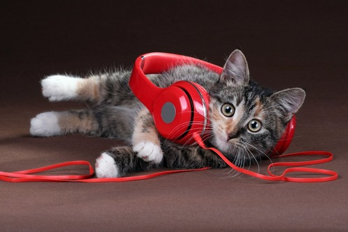 ヘッドフォンをかけた猫