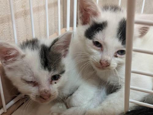 身を寄せ合う子猫たち