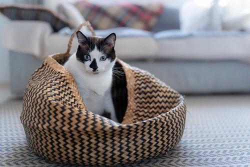 猫ちぐらに入る猫