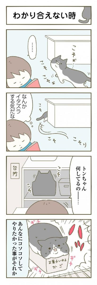 分かりあえない猫