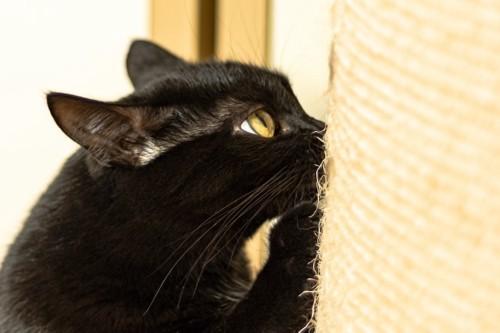 ポールで爪とぎをする猫