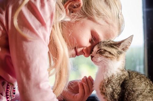 人間と額を合わせる猫