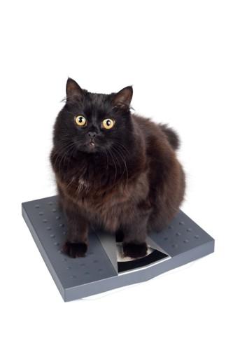 体重計に乗る黒猫