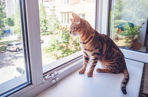窓辺に座って外を眺める猫