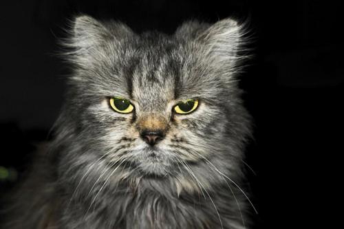 瞳孔が開いている猫