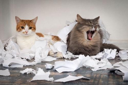 ちぎれたティッシュと猫2匹