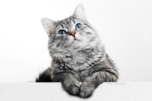 こちらを向く猫