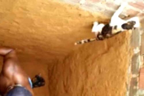 さらに登る猫