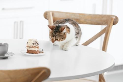 つまみ食いする猫